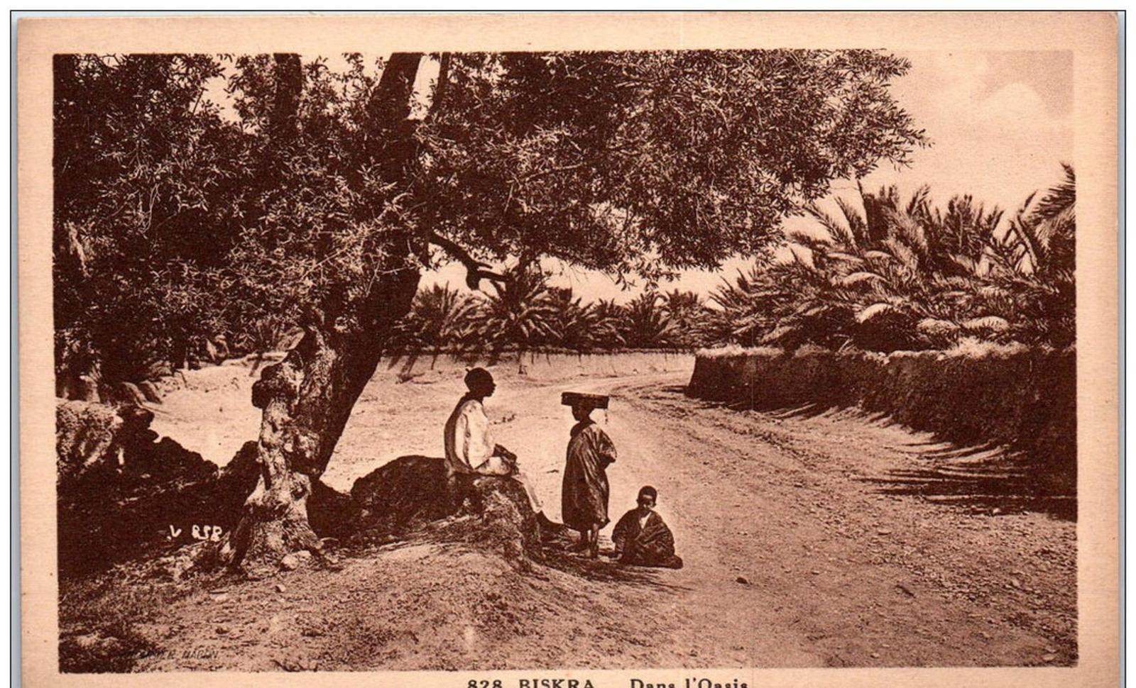 Biskra - ALGERIE - BISKRA - dans l'oasis ---