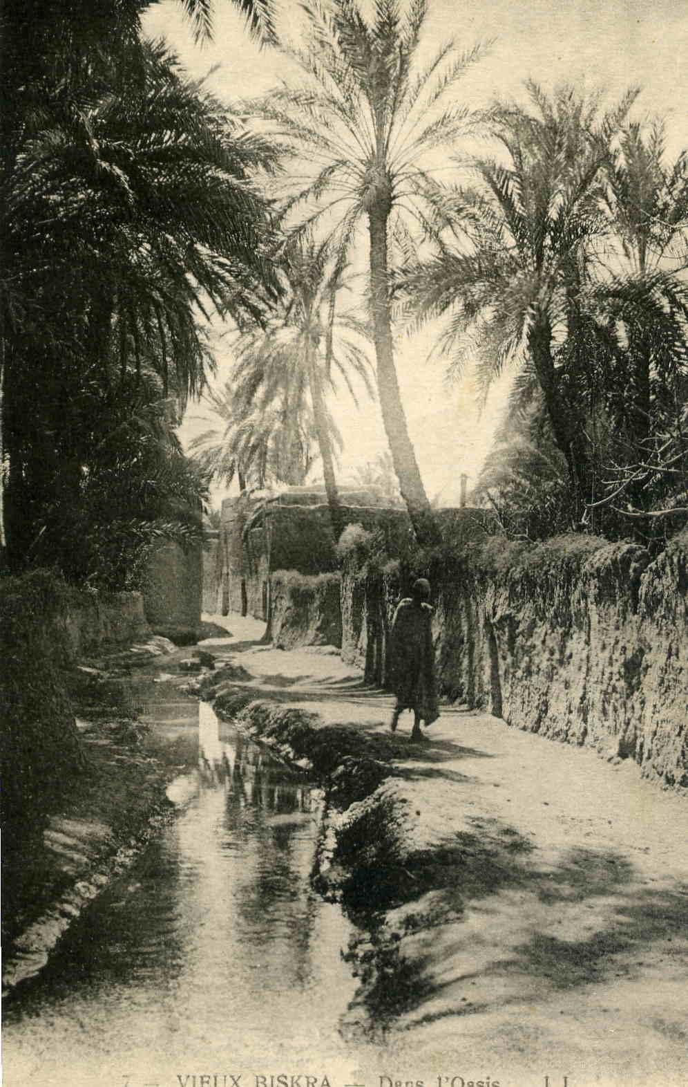 Biskra - Dans l'oasis