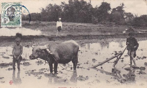 Hanoi - HANOI / PETITS LABOUREURS ANNAMITES / LL 70