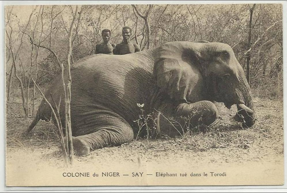 -  COLONIE DU NIGER - CPA - ELEPHANT TUE DANS LE TORODI