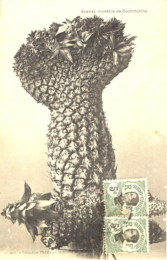 Saïgon -  Saïgon - Ananas monstre de Cochinchine
