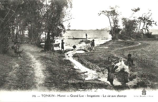 Hanoï - Tonkin-Grand Lac-Irrigations-La vie aux champs