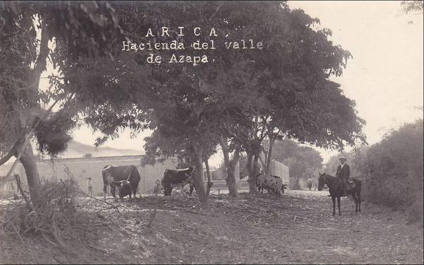 Arica - Hacienda del valle de Azapa.