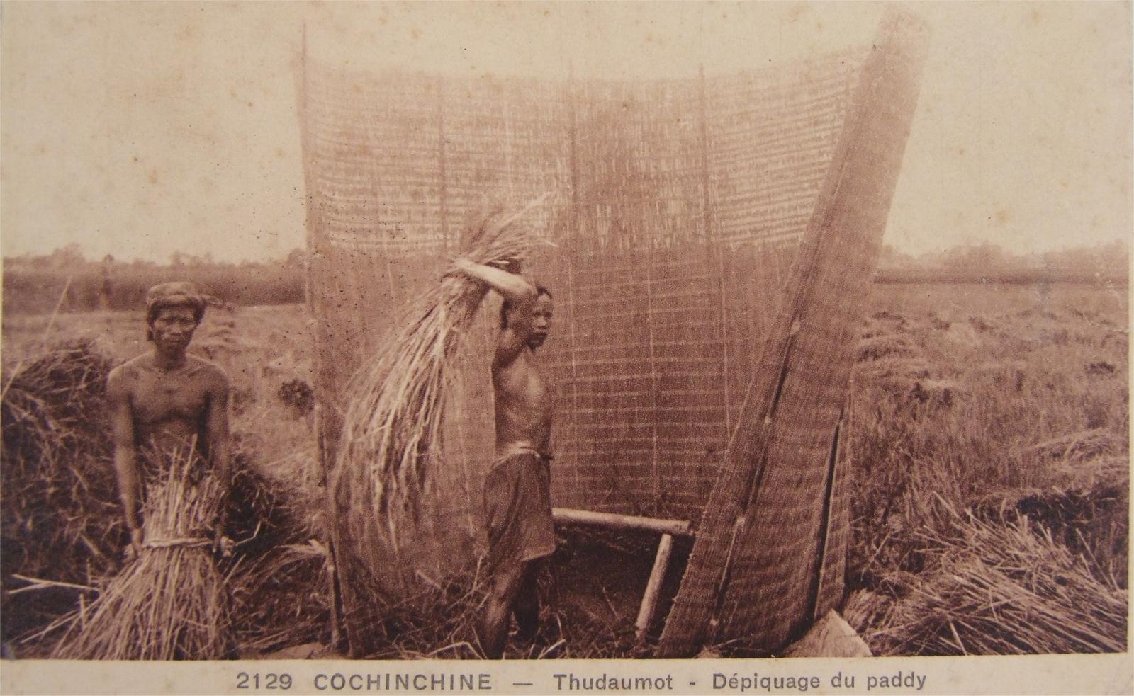-  Cochinchine - Thudaumot - Dépiquage du Paddy (1936)