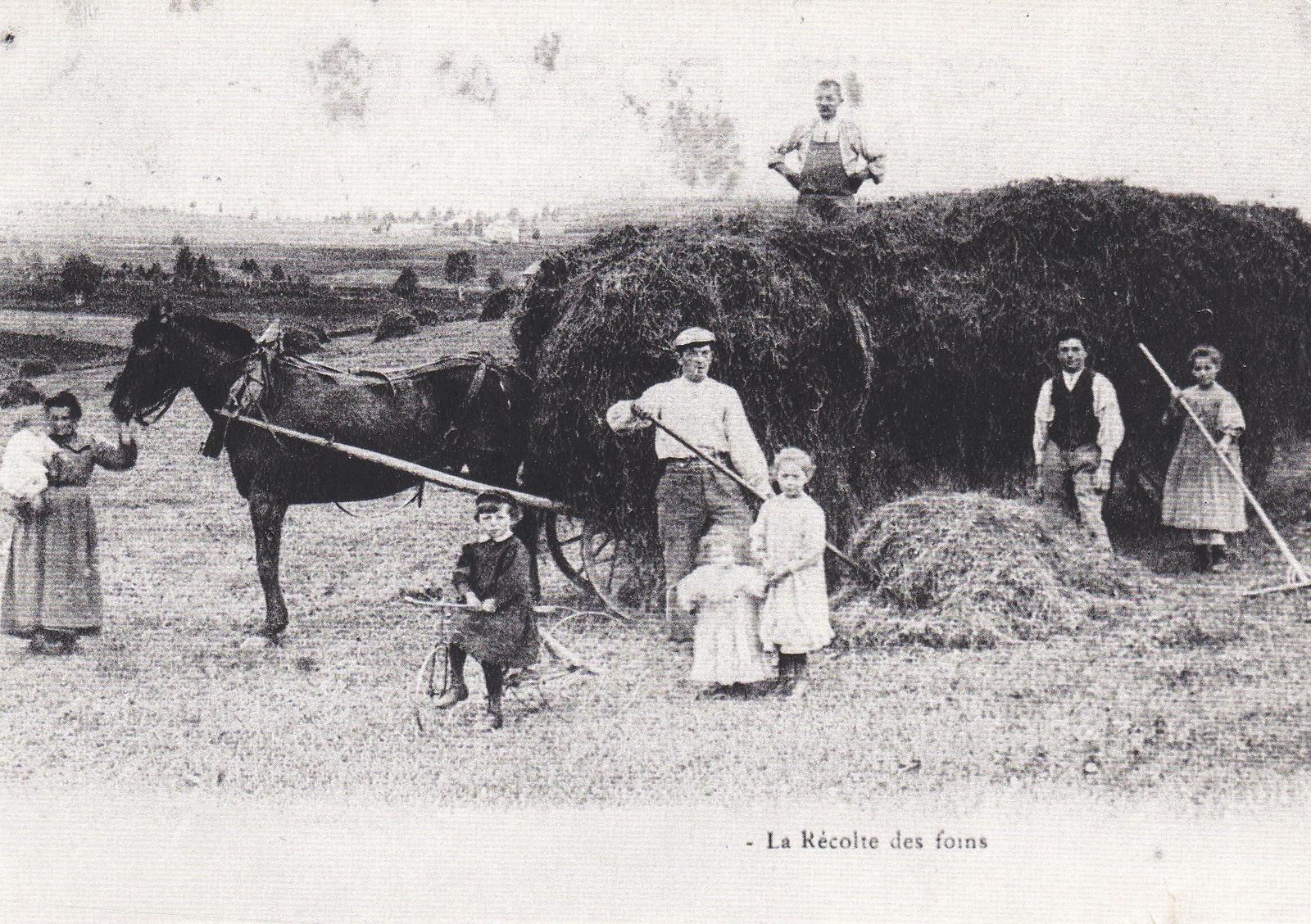 Aix-Noulette -   la récolte des foins en 1900 travaux des champs