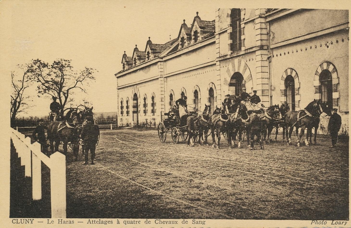 Cluny - Cluny. Le haras. Attelages à quatre de chevaux de sang.