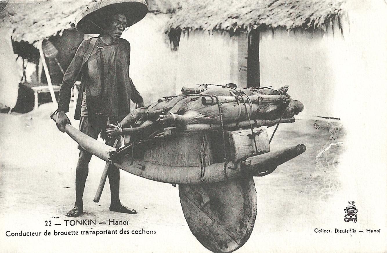 Hanoï -  Tonkin-Hanoï-Conducteur de brouette transportant des cochons
