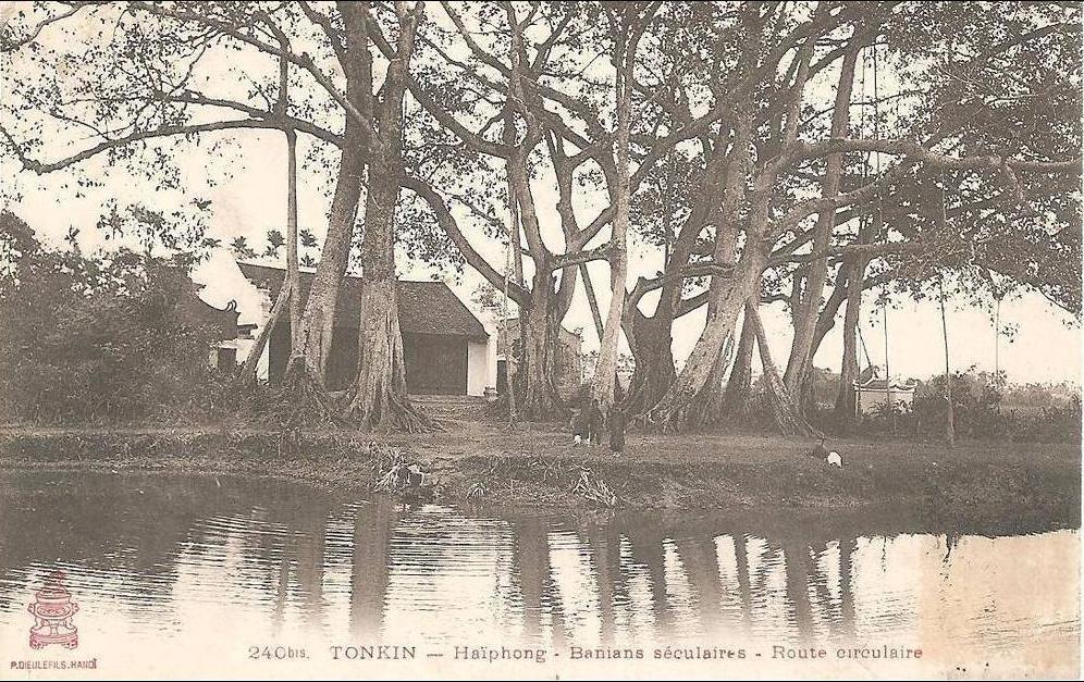 Haiphong -  TONKIN   HAIPHONG   BANIANS SECULAIRES