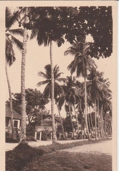 Douala - CAMEROUN DOUALA Avenue des Cocotiers 1530J